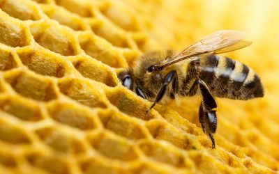#SaveTheBees: The movement that is taking Crowdfunder by storm