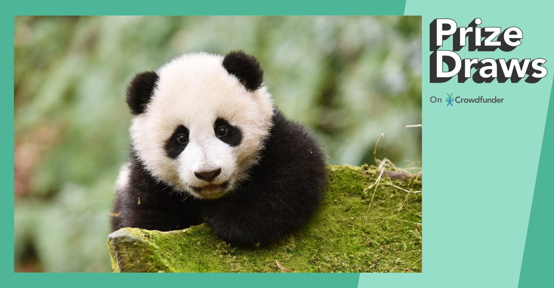 Prize draws on Crowdfunder: Edinburgh Zoo's prize draw